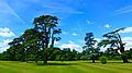 Wilton House grounds trees.jpg