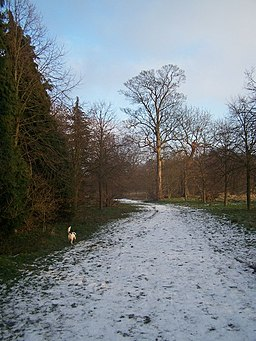 Winter in Camer Country Park - geograph.org.uk - 1119548