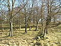 Woodland - geograph.org.uk - 329264.jpg