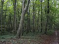 Woodland of Chessell Down - geograph.org.uk - 581395.jpg