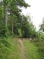 Woodland track - geograph.org.uk - 936872.jpg