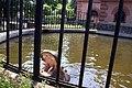 Wrocławskie ZOO Wybieg hipopotamów fot BMaliszewska.jpg