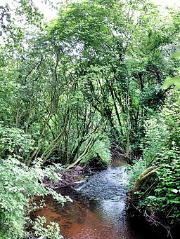 Wych Brook - three counties (and two countries) join - geograph.org.uk - 842360