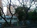 Xicranda del carrer Alfons XII P1510350.jpg