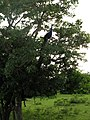 Yala National Park 0665.jpg