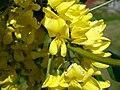 Yellowflowers3.jpg