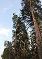 Zhukovskiy, Moscow Oblast, Russia - panoramio (25).jpg