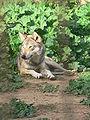 Zoo19feb (39).JPG