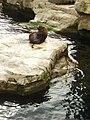 Zoo am Meer 2008 PD 29.JPG
