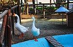 Zoo de Lisboa by Juntas 4.jpg