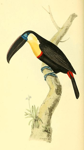 Zoological Illustrations Volume I Plate 56.jpg