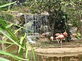 Zoologico de Cali (15149407796).jpg