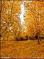 (((پاییز روستای تازه کند سفلی ))) - panoramio.jpg