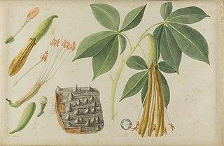 (Folhas, flores e frutos)