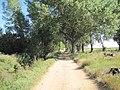 Árboles en Bercianos del Páramo.jpg