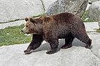 Ähtärin karhut 16.jpg