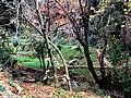 ΚΑΣΤΑΝΕΑ ΒΟΙΩΝ ΛΑΚΩΝΙΑΣ-KASTANEA VION LAKONIAS - panoramio (17).jpg