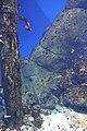 "Аквариум в павильоне ""Москвариум"", ВВЦ, Москва - panoramio (7).jpg"