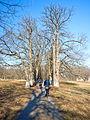 Алея в Будищанському парку.jpg