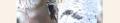 Волосатый дятел, Аляска. Географ.png