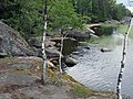 Выборг, парк Монрепо, берег с березами, растущими на камнях - panoramio.jpg