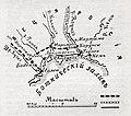 Иллюстрация к статье «Боден». Военная энциклопедия Сытина (Санкт-Петербург, 1911-1915).jpg