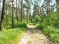 Между с-т Русь и Селиванихой 2013 - panoramio (2).jpg