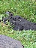 Нечистоты, сваленные в парке 330-го стрелкового полка, при чистке канализационных колодцев - panoramio (2).jpg