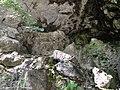 Окрестности Гегского водопада - panoramio (3).jpg