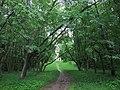 Остатки регулярного парка усадьбы Чернышевых, террасами спускавщегося к пруду.JPG