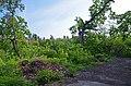 Парк Нивки, західна частина, верхня частина парку.jpg