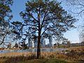 Святошинський лісопарк IMG 7605.jpg