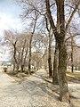 Сквер Ворошилова, Воронеж 02.jpg