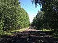 Старый Сибирский тракт - panoramio (14).jpg