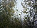 Тишина в утренних кустах - panoramio.jpg