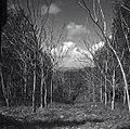 גניגר - היער בגניגר.-JNF030252.jpeg