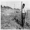 המאורעות בארץ ישראל 1938 - חומת טגארט בגבול לבנון סוריה-PHL-1088128.png