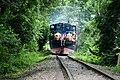 ট্রেন ভ্রমণ লাউয়াছড়া বন এর ভেতর.jpg