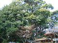 今宮神社6.jpg