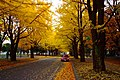北海道大学(Hokkaido University) - panoramio (6).jpg