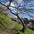 広橋梅林 Hirohashi-bairin 2014.3.22 - panoramio (3).jpg