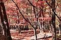 昇仙峡 - panoramio (57).jpg