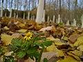 深秋里的小花 - panoramio.jpg