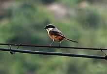 En fugl fotografert på Caohai.