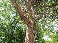 0011jfArroceros Forest Park Manila Ermita Fences Villegas Streetfvf 03.jpg