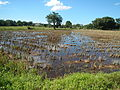 09676jfLandscapes Grasslands Plaridel Bypass Road Bonga Menor Bustos Bulacan Villagesfvf 15.JPG