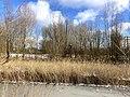 0999.Vinkhuizen.DeHeld.Roege.Bos.Winter.IJs.Sneeuw.Koud.Februari.jpg