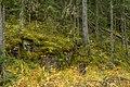 10 Хвойный лес. Валаам.jpg