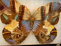 11 Art Butterfly.JPG