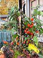 1462505 Fall-Plants 620.jpg